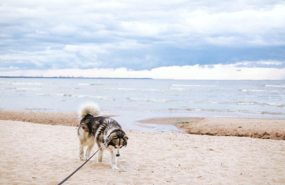 Op vakantie naar strandhuisjes in Ouddorp?